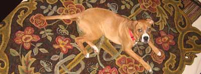 roomsized rug hooked rug by Cindi Gay